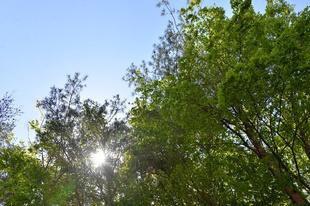 夏を思わせる木漏れ日がさんさんと