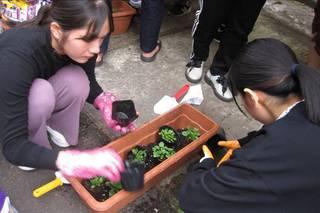 学生もビオラを植えるのは初めて!