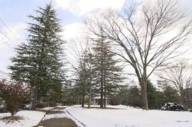 泉中央公園は久々の雪!