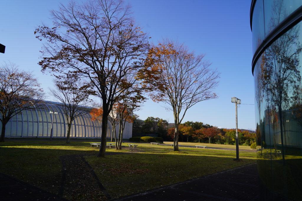澄み切った青空。寒いけど気持ちのいい朝です。