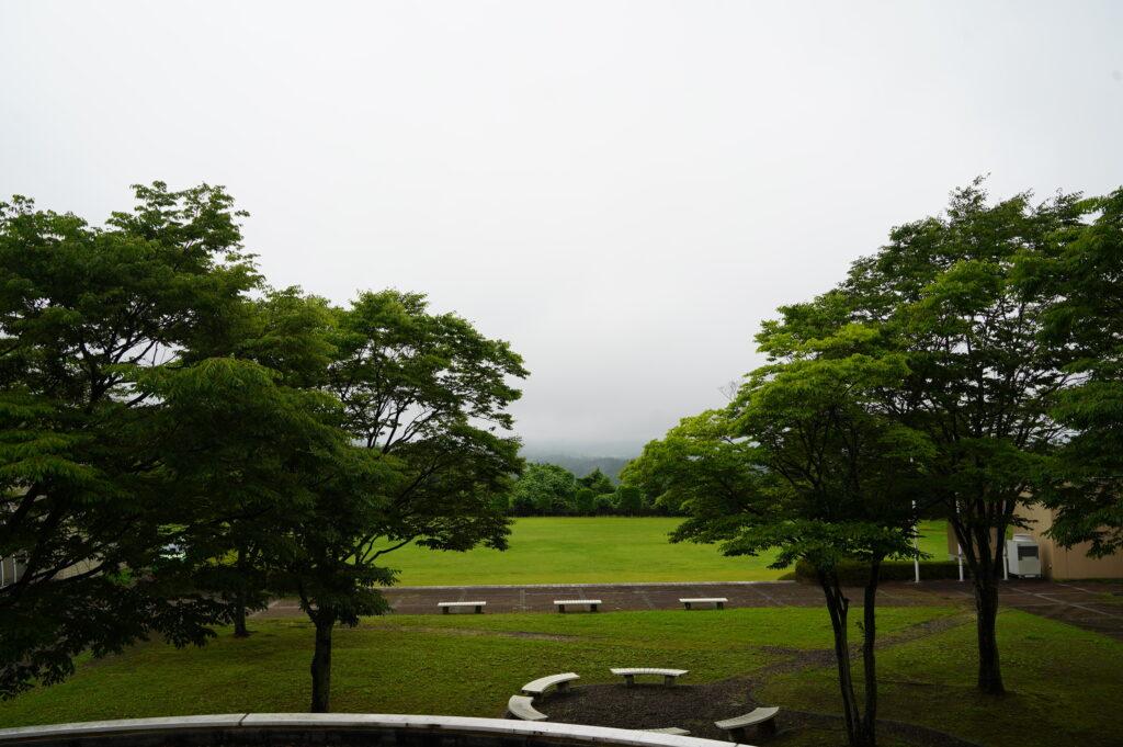梅雨空のもと、中庭からの風景。新緑が目に鮮やかです。